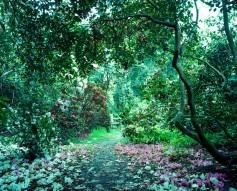 Through the bushes