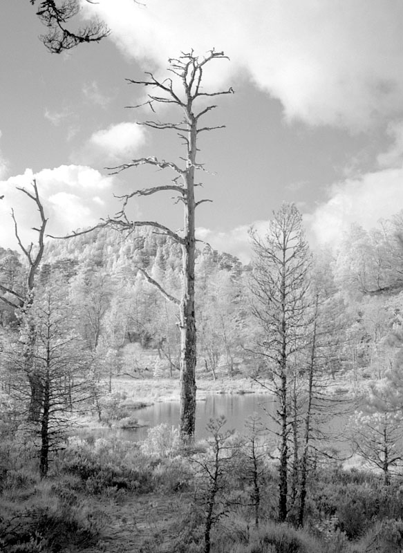 2011-11-12, Glen Affric, Yashicamat, IR400, 3_