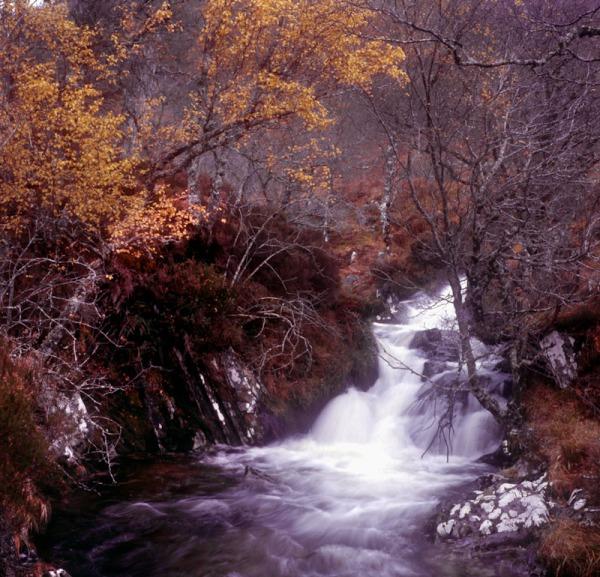 2011-11-16, Yashicamat, Provia 400X, Loch Affric, 3