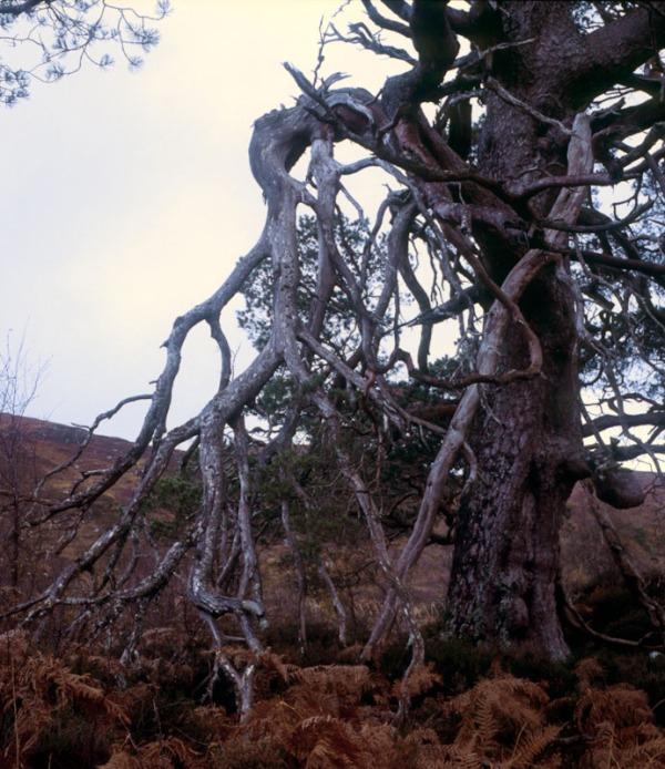 2011-11-16, Yashicamat, Provia 400X, Loch Affric, 9