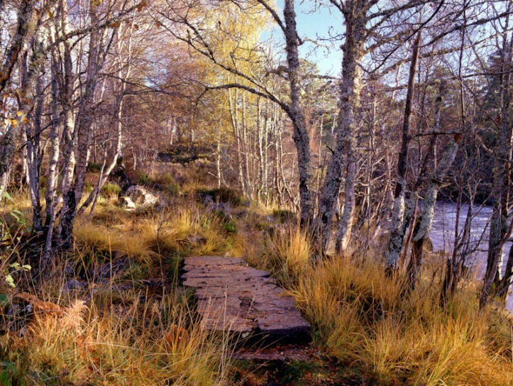Riverside walk, River Affric, Mamiya RZ67 and Fuji Velvia 50