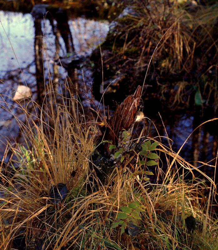 2013-11-10, RZ67, Velvia 50, Back 3C, River Affric , 9
