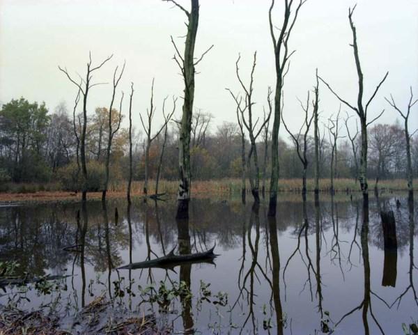 2014-11-22, Arcot Lake, RZ67, Ektar, Digibase,  002