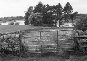 Ryal, Northumberland. Rollei RPX100 film dev'd in Rodinal