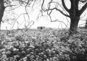 WW2 pillbox at Ryal, Northumberland