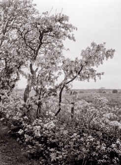 Somewhere in Northumberland, Rollei RPX100 film dev'd in Rodinal