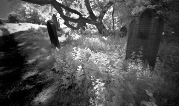 Pinhole infrared at Earsdon churchyard