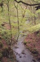 2015-5-10, Plessey Woods, Olympus 35RC, Agfa Vista 200, Digibase,17