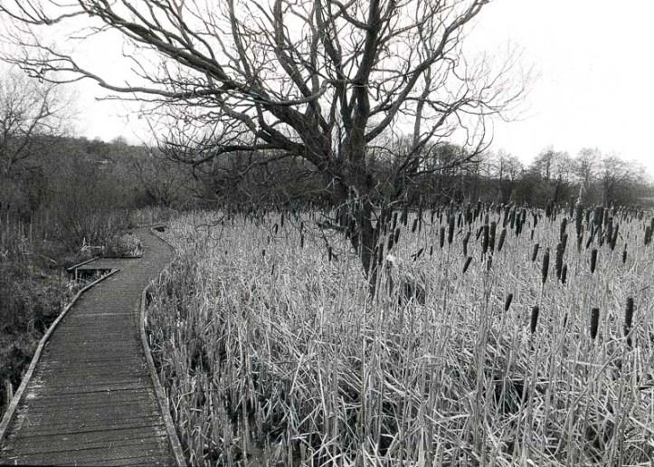 2016-1-23, Canon FTb, Shibdon Pond, Retropan 320, Rodinal 1+50 13m 20c, 033