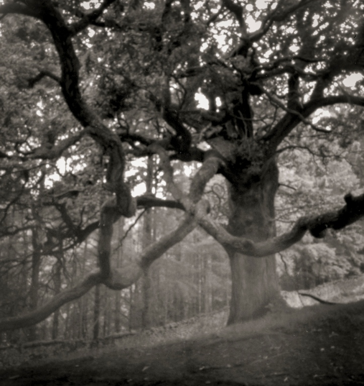 Tangled Tree in the Valley of Desolation