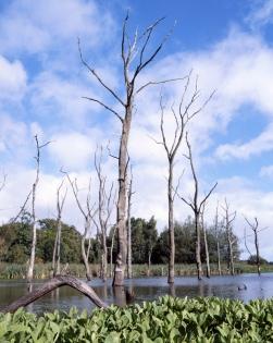 Arcot Lake