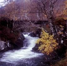 Near Loch Affric (Yashicamat)