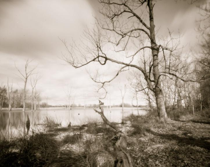 2017-3 Arcot Lake, Intrepid 4x5, TMax100, HC110 Dil B Jobo 5m, 2